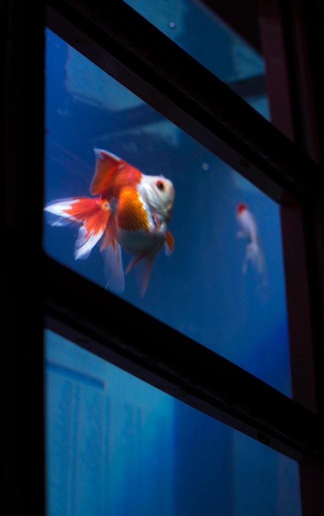 fishboothmid.jpg