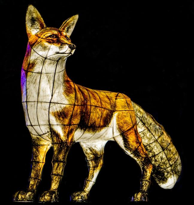 foxdar.jpg